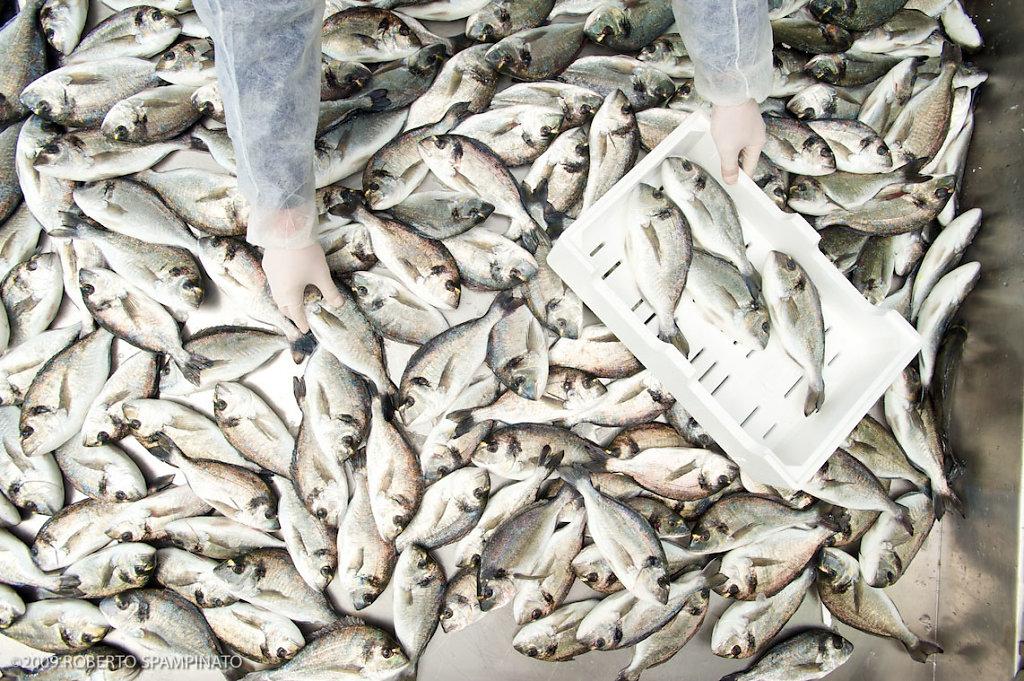 Italy, Fish factory